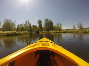 The view from my kayak.